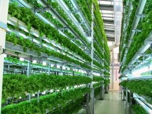 largescalehydroponics